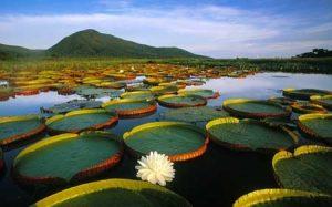 biomas brasileiros - Paisagem típica do Pantanal