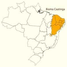biomas brasileiros - caatinga