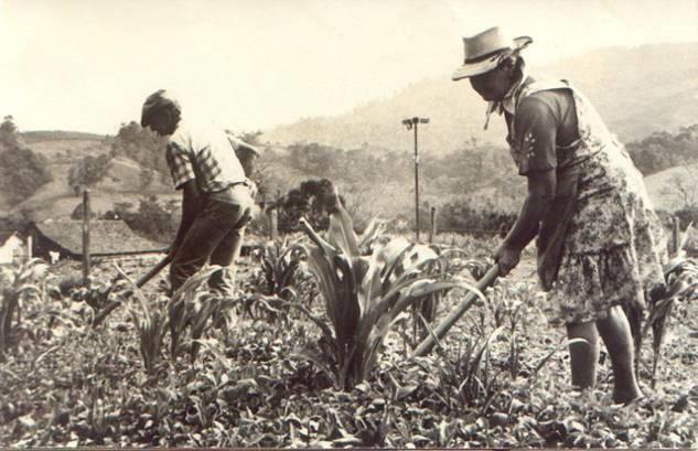 trabalhadores rurais - urbanização