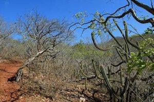 biomas brasileiros - Paisagem caatinga