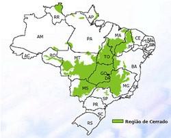 biomas brasileiros - cerrado