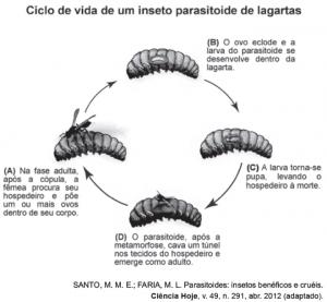 ciclo da vida lagarta
