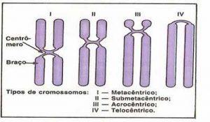 cromossomos - tipos de cromossomos