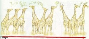 teorias da evolução girafas lamarckismo