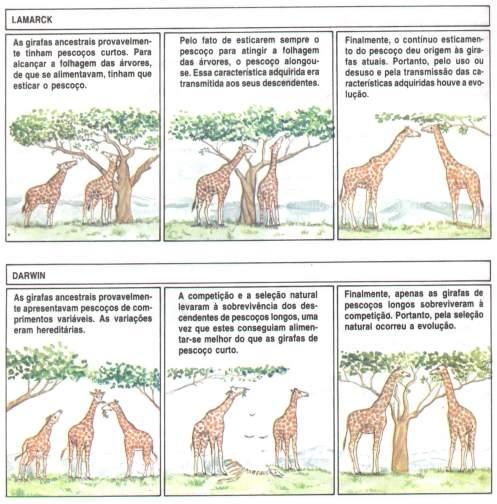 comparação entre darwin e lamarck