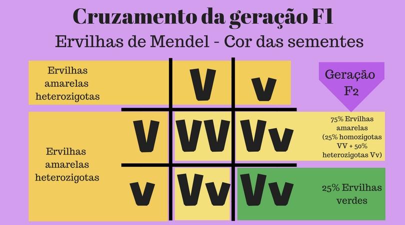 Lei de Mendel - Cruzamento da geração F1