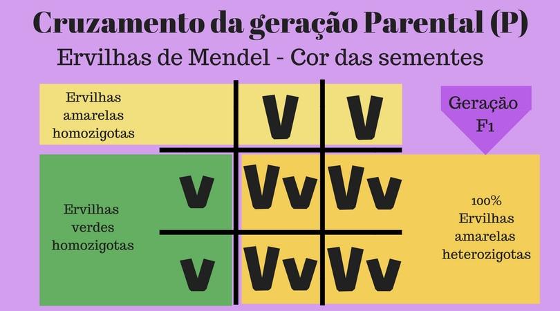 Primeira Lei de Mendel - Cruzamento da geração parental