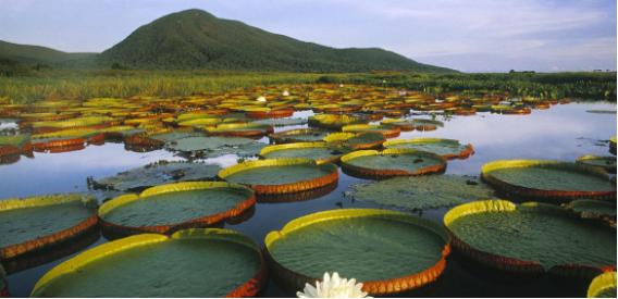 patrimônio cultural - Pantanal, patrimônio natural
