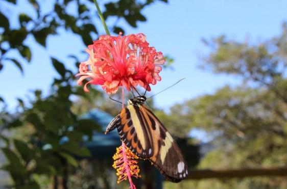 seres vivos - borboleta