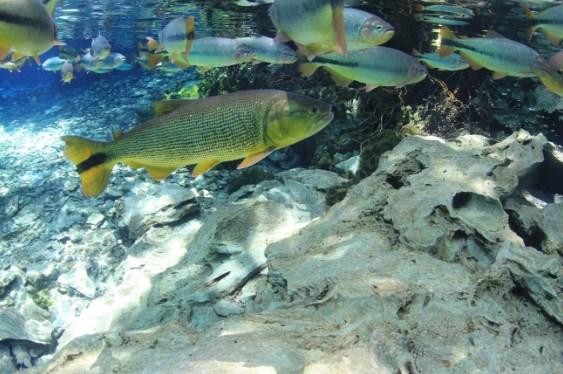 seres vivos - peixes