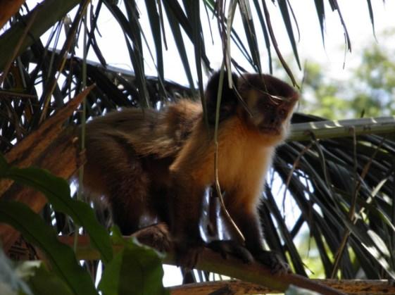 seres vivos - macaco