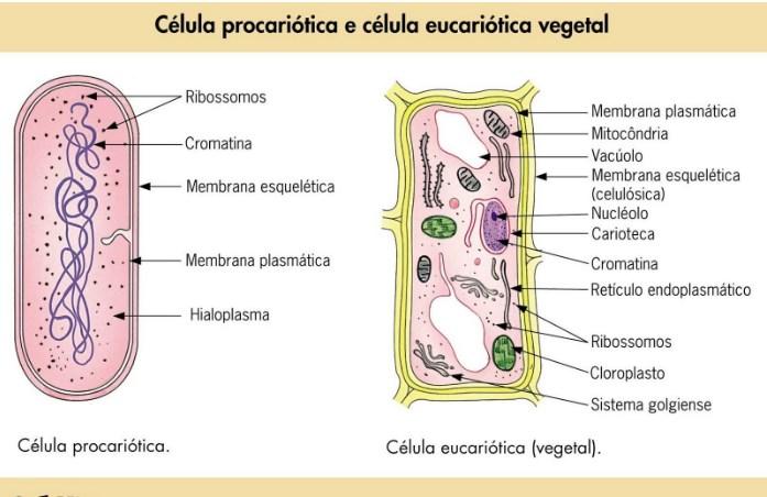 classificação dos seres vivos - célula
