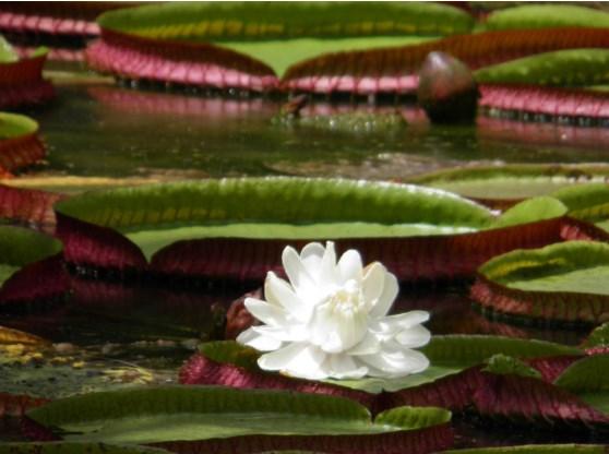 classificação dos seres vivos - autótrofo fotossintético