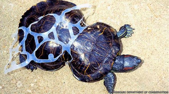 tartaruga presa no lixo
