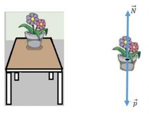 força normal em um vaso de flor