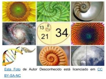 Exemplos da espiral de Fibonacci na natureza