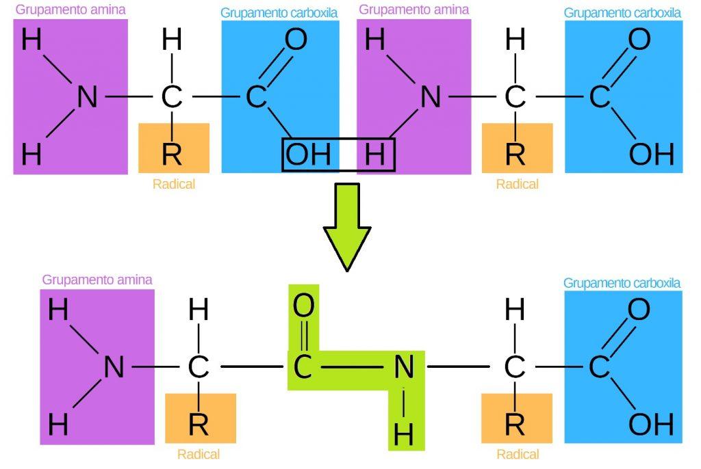 A Estrutura das Proteínas