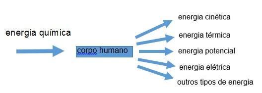 transformação de energia no corpo humano