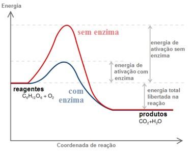 energia de ativação e enzimas