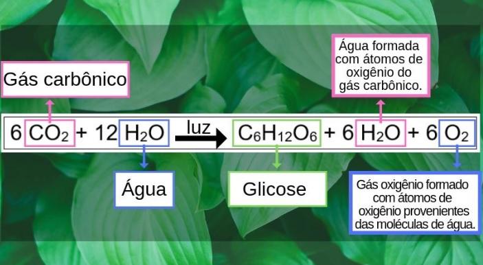 equação geral fotossíntese