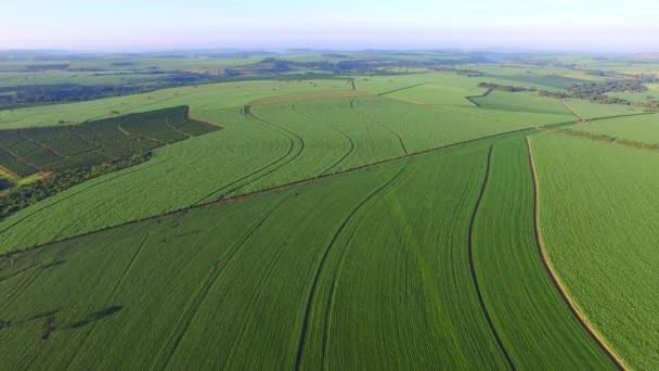 plantação de soja e comercio exterior no brasil