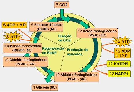 resumo da fotossíntese