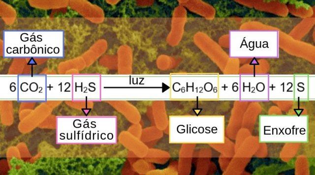 bacterias e fotossíntese