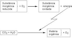 exercício de quimiossíntese