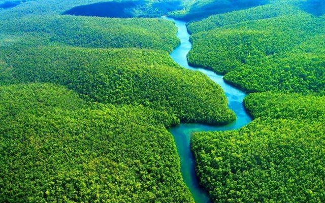 floresta amazonica vegetação brasileira