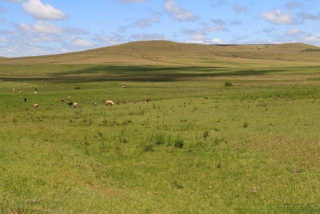 pampas e campos sulinos