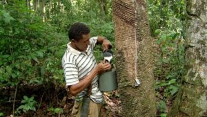 extrativismo vegetal no Brasil