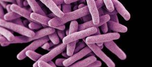 Koch doenças bacterianas tuberculose