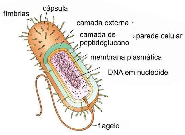 bactéria reino monera