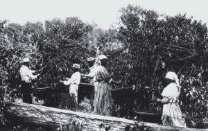economia cafeeira e o pré-modernismo