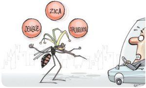 zica, chicungunha e dengue