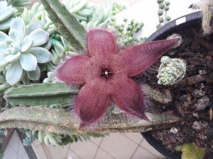 estrutura das angiospermas flor de cacto