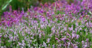flores angiospermas