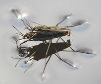 insetos e forças intermoleculares