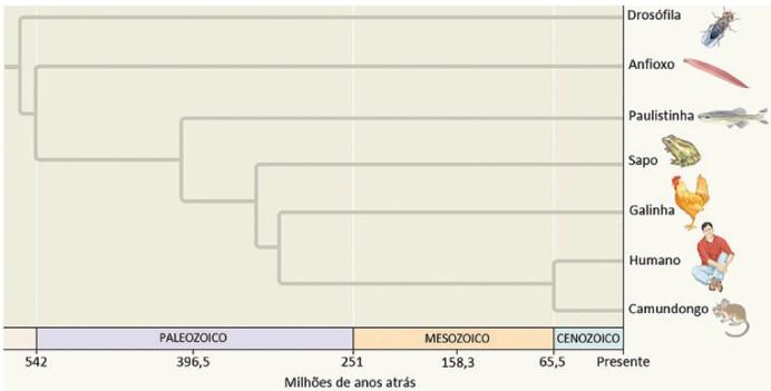 filogenia dos cordados