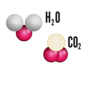 substancias compostas água e gas carbonico