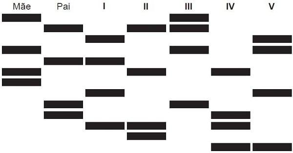 Exercício 1 - Enem - Biologia - Teste de DNA