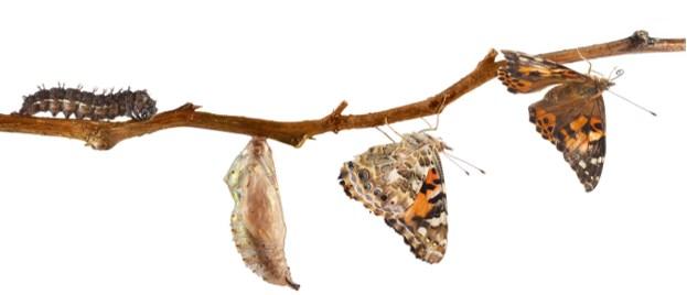 estagios de uma borboleta