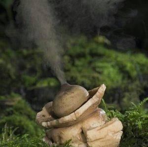 fungos e esporos