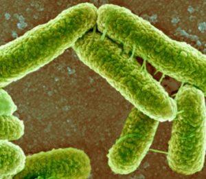 píli estabelecidos entre bactérias