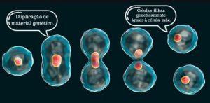 reproducao assexuada cissiparidade