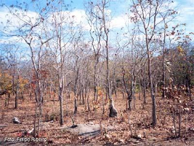 figura 1 - zonas de transição dos biomas brasileiros