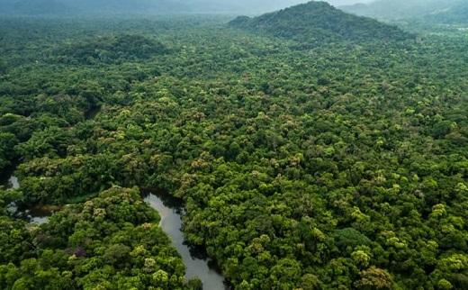 florestas tropicais - biomas mundiais